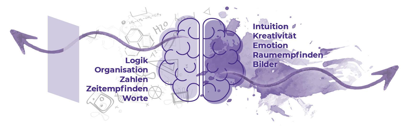 Aufgaben Gehirn